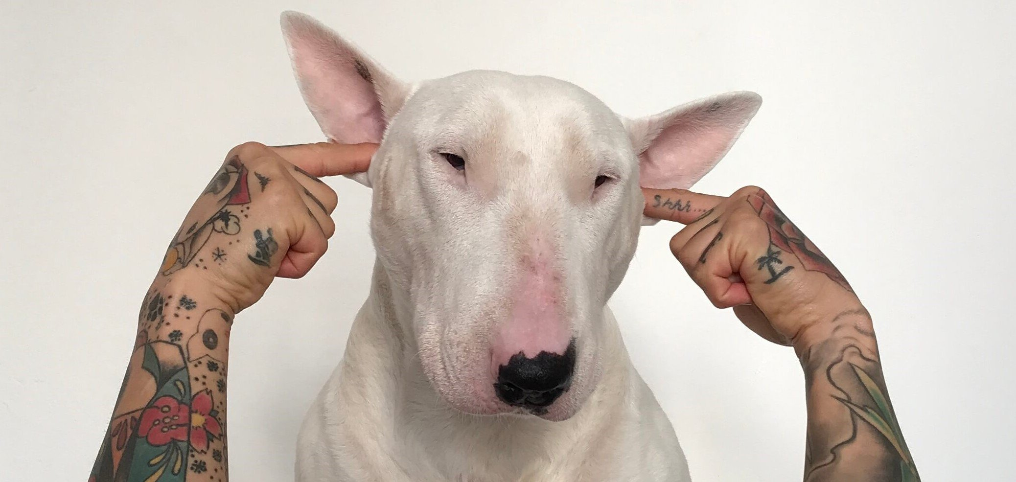 Dog with man's fingers in ears